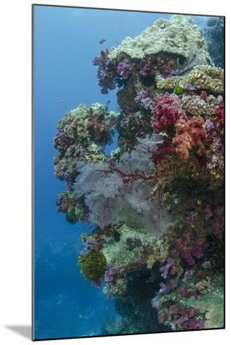 Coral Reef Diversity, Fiji-Pete Oxford-Mounted Photographic Print