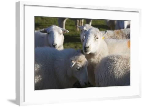 Sheep, Snowdonia, Wales, UK-Peter Adams-Framed Art Print