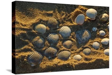 Shells on Bound Brook Island, Cape Cod, Wellfleet, Massachusetts-Jerry & Marcy Monkman-Stretched Canvas Print