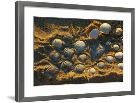 Shells on Bound Brook Island, Cape Cod, Wellfleet, Massachusetts-Jerry & Marcy Monkman-Framed Art Print