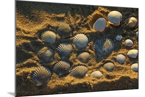 Shells on Bound Brook Island, Cape Cod, Wellfleet, Massachusetts-Jerry & Marcy Monkman-Mounted Photographic Print