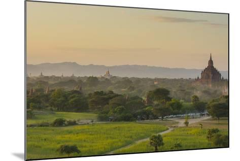 Myanmar. Bagan. Horse Carts and Cattle Walk the Roads at Sunset-Inger Hogstrom-Mounted Photographic Print