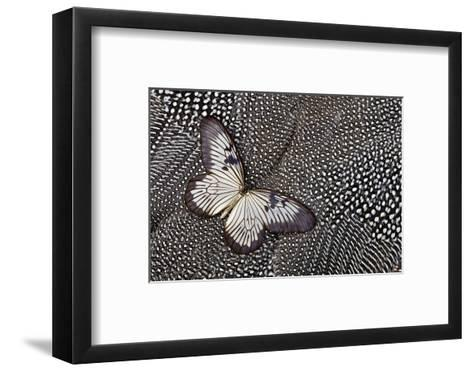 Paper Kite Tropical Butterfly on Helmeted Guineafowl-Darrell Gulin-Framed Art Print