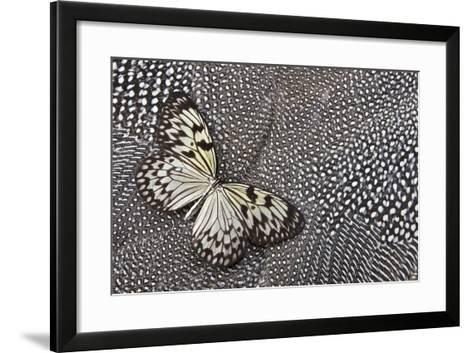 Paper Kite Tropical Butterfly on Helmeted Guineafowl-Darrell Gulin-Framed Art Print