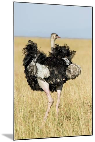 Kenya, Maasai Mara, Mara Triangle, Mara River Basin, Masai Ostrich-Alison Jones-Mounted Photographic Print