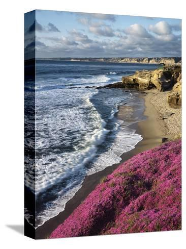USA, California, La Jolla, Flowers Along the Pacific Coast-Christopher Talbot Frank-Stretched Canvas Print