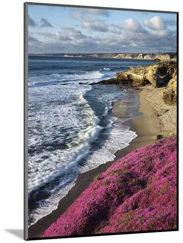USA, California, La Jolla, Flowers Along the Pacific Coast-Christopher Talbot Frank-Mounted Photographic Print