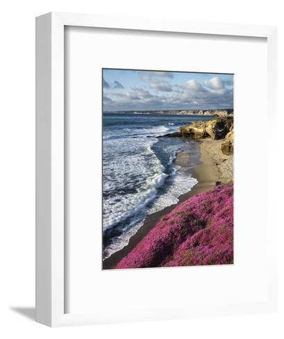 USA, California, La Jolla, Flowers Along the Pacific Coast-Christopher Talbot Frank-Framed Art Print