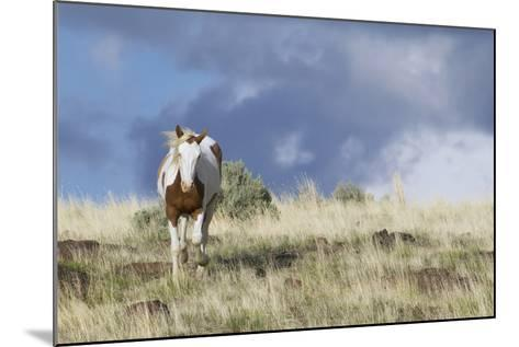 Wild Horse, Steens Mountains-Ken Archer-Mounted Photographic Print