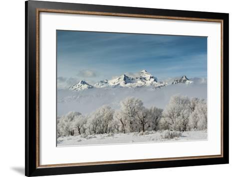 Rimed Cottonwoods and Tetons from Antelope Flats Road-Howie Garber-Framed Art Print