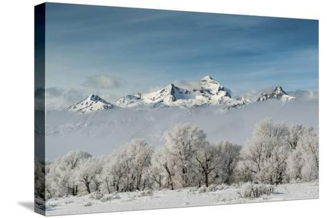 Rimed Cottonwoods and Tetons from Antelope Flats Road-Howie Garber-Stretched Canvas Print