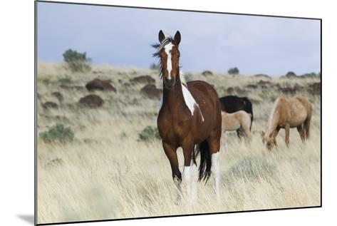 Wild Horses, Steens Mountains-Ken Archer-Mounted Photographic Print