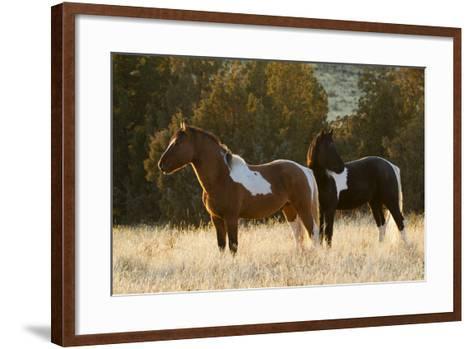 Wild Horses, Steens Mountains-Ken Archer-Framed Art Print