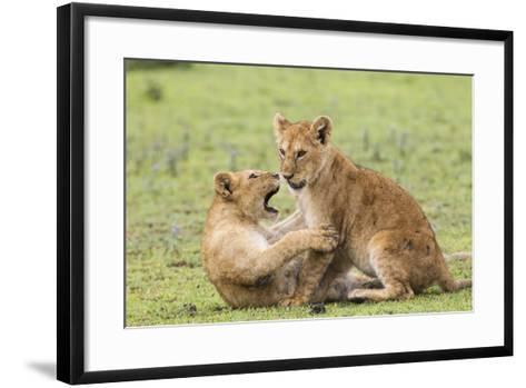 Two Lion Cubs Play, Ngorongoro, Tanzania-James Heupel-Framed Art Print