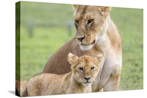Lioness with its Cub Standing Together, Ngorongoro, Tanzania-James Heupel-Stretched Canvas Print