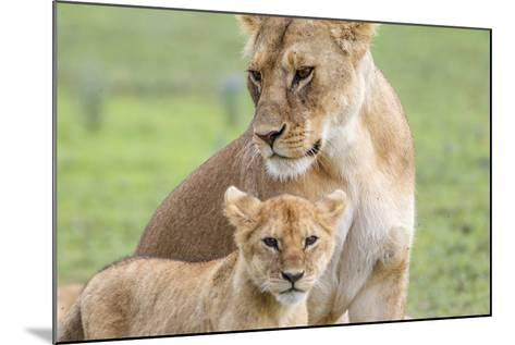 Lioness with its Cub Standing Together, Ngorongoro, Tanzania-James Heupel-Mounted Photographic Print