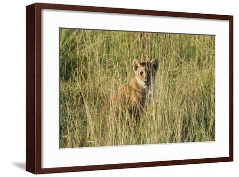 Kenya, Maasai Mara, Mara Triangle, Mara River Basin, Lion Cubs-Alison Jones-Framed Art Print