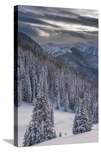 Fresh Snow in Evergreens, Wasatch Mountains, Uinta-Wasatch-Cache, Utah-Howie Garber-Stretched Canvas Print