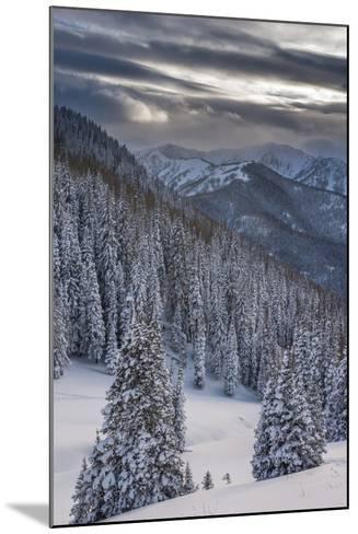 Fresh Snow in Evergreens, Wasatch Mountains, Uinta-Wasatch-Cache, Utah-Howie Garber-Mounted Photographic Print