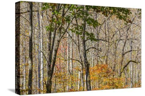 North Carolina, Great Smoky Mountains NP, View from Newfound Gap Road-Jamie & Judy Wild-Stretched Canvas Print