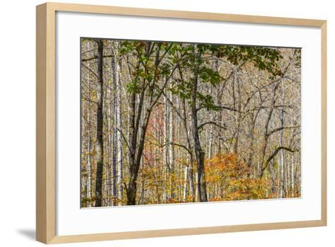 North Carolina, Great Smoky Mountains NP, View from Newfound Gap Road-Jamie & Judy Wild-Framed Art Print