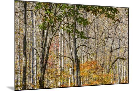 North Carolina, Great Smoky Mountains NP, View from Newfound Gap Road-Jamie & Judy Wild-Mounted Photographic Print