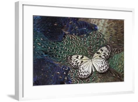 Paper Kite Butterfly on Breast Feathers of Ring-Necked Pheasant Design-Darrell Gulin-Framed Art Print