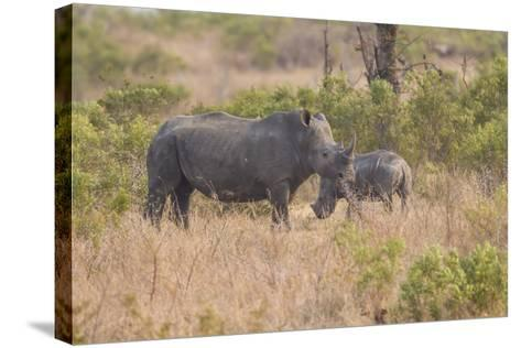 South Londolozi Private Game Reserve. Rhinoceros Mother and Offspring-Fred Lord-Stretched Canvas Print