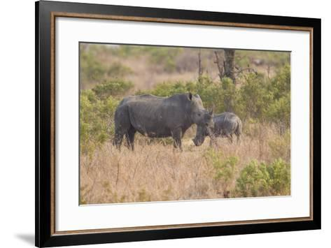 South Londolozi Private Game Reserve. Rhinoceros Mother and Offspring-Fred Lord-Framed Art Print