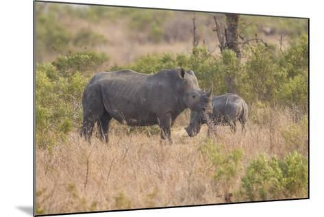 South Londolozi Private Game Reserve. Rhinoceros Mother and Offspring-Fred Lord-Mounted Photographic Print