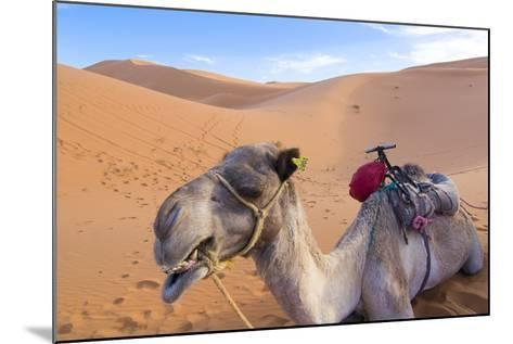 Morocco, Sahara Desert Sand Dunes Close Up of Camel for Rides-Bill Bachmann-Mounted Photographic Print