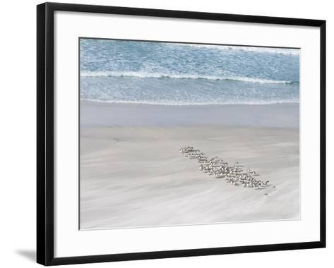 Rockhopper Penguin Landing as a Group, Crossing the Wet Beach-Martin Zwick-Framed Art Print