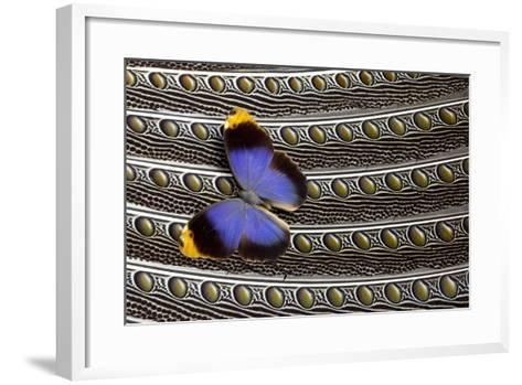 Owl Butterfly on Argus Wing Feathers-Darrell Gulin-Framed Art Print