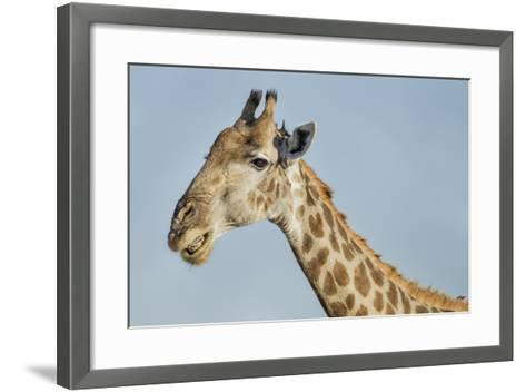 Botswana, Moremi Reserve, Giraffe Baring Teeth in Imitation of a Grin-Paul Souders-Framed Art Print