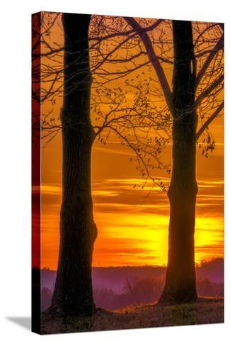 USA, Pennsylvania, King of Prussia. Tree Silhouette at Sunrise-Jay O'brien-Stretched Canvas Print