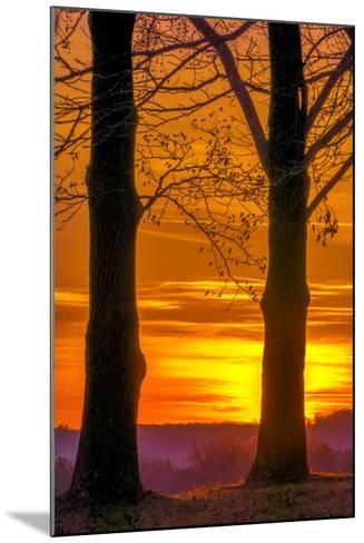 USA, Pennsylvania, King of Prussia. Tree Silhouette at Sunrise-Jay O'brien-Mounted Photographic Print