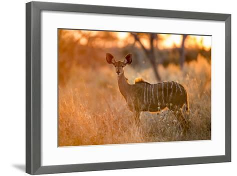 Botswana, Chobe NP, Greater Kudu Standing in Savuti Marsh at Sunrise-Paul Souders-Framed Art Print