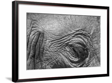 Botswana, Chobe NP, Eyeball of Elephant Standing Along Chobe River-Paul Souders-Framed Art Print