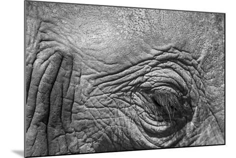 Botswana, Chobe NP, Eyeball of Elephant Standing Along Chobe River-Paul Souders-Mounted Photographic Print
