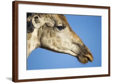 Botswana, Chobe NP, Close-up of Giraffe Standing Near Chobe River-Paul Souders-Framed Art Print
