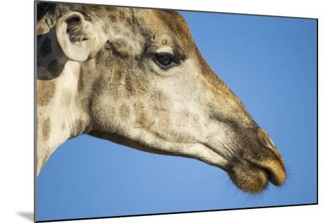 Botswana, Chobe NP, Close-up of Giraffe Standing Near Chobe River-Paul Souders-Mounted Photographic Print
