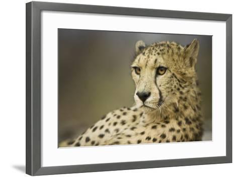 Livingstone, Zambia, Africa. Cheetah-Janet Muir-Framed Art Print
