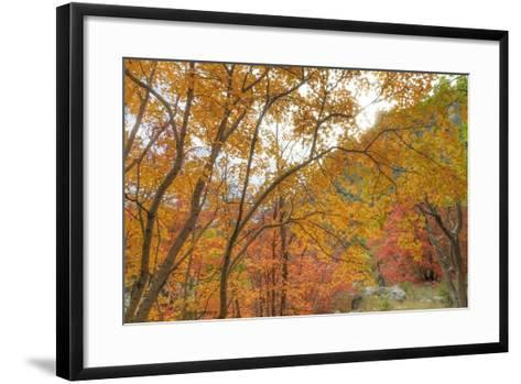 Texas, Guadalupe Mountains NP. Bigtooth Maple Trees in Fall Color-Don Paulson-Framed Art Print