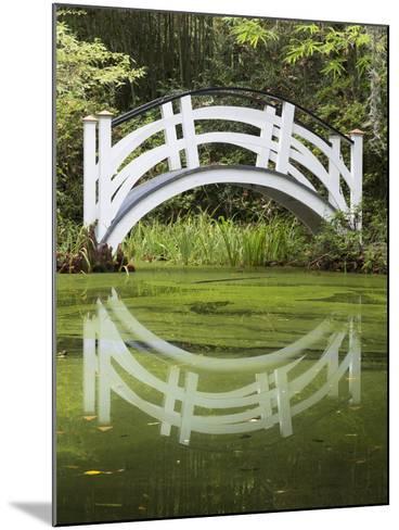 South Carolina, Charleston, Magnolia Plantation. Arching Bridge-Don Paulson-Mounted Photographic Print