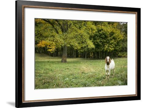 Pittsburg, PA. USA. Fall on the Farm-Julien McRoberts-Framed Art Print
