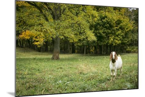 Pittsburg, PA. USA. Fall on the Farm-Julien McRoberts-Mounted Photographic Print