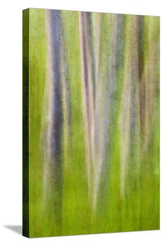 USA, Washington State. Alder Tree Abstract-Don Paulson-Stretched Canvas Print