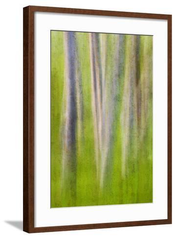 USA, Washington State. Alder Tree Abstract-Don Paulson-Framed Art Print