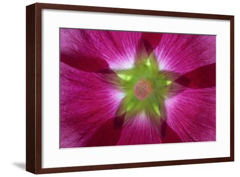 USA, Washington State, Seabeck. Hollyhock Blossom Composite-Don Paulson-Framed Art Print