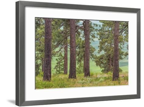 USA, Washington State, Palouse Hills. Pine Forest Scenic-Don Paulson-Framed Art Print